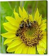 Three Bees Hunkering Down Canvas Print