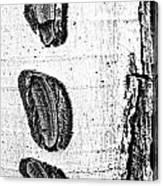 Three Bites Canvas Print