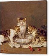 Three Cats - Red Cherries And Bees Canvas Print