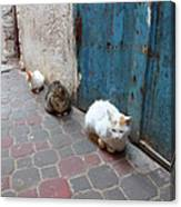 Three Cats In Essaouira Canvas Print