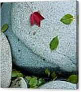 Three Fallen Leaves Lie On A Rock Canvas Print