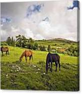Three Horses Grazing In Field Canvas Print