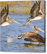 Three Pelicans Taking Off Canvas Print