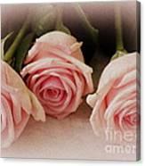 Three Pink Roses Canvas Print