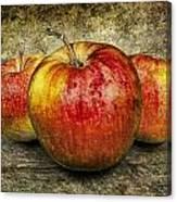 Three Red Apples Canvas Print
