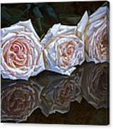 Three Roses Still Life Canvas Print