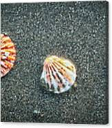 Three Sea Shells Canvas Print
