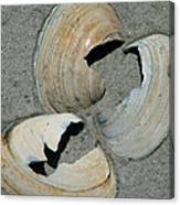 Three Shells Canvas Print