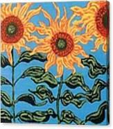 Three Sunflowers IIi Canvas Print