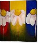 Three Times A Daisy Canvas Print