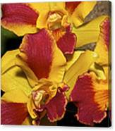 Three Yellow And Red Orchids Canvas Print
