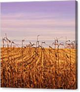 Through The Cornfield Canvas Print