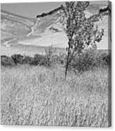 Through The Tall Grasses Canvas Print