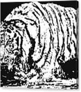 Tiger 3 Canvas Print