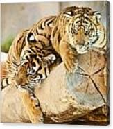 Tiger And Cub Canvas Print