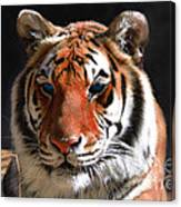 Tiger Blue Eyes Canvas Print