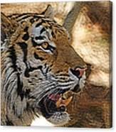 Tiger De Canvas Print