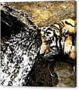 Tiger Falls Canvas Print