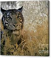 Tiger In Infrared Canvas Print