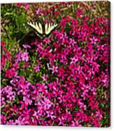 Tiger In The Phlox 6 Canvas Print