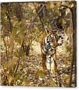 Tiger In The Undergrowth At Ranthambore Canvas Print