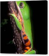 Tiger Leg Monkey Frog Canvas Print