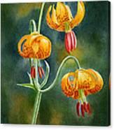 Tiger Lilies #3 Canvas Print