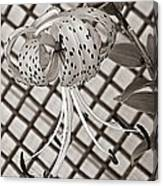 Tiger Lily And Rusty Gate Canvas Print