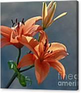 Tiger Lily Splendor Canvas Print