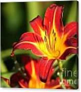 Tiger Lily0239 Canvas Print