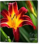 Tiger Lily0263 Canvas Print