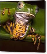 Tiger-stripe Monkey Frog Canvas Print