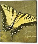 Tiger Swallowtail Butterfly - Papilio Glaucas Canvas Print