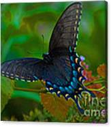 Tiger Swallowtail Butterfly Female Canvas Print