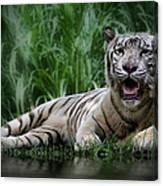 Tiger White Canvas Print