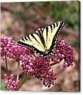 Tigertale Butterfly Canvas Print