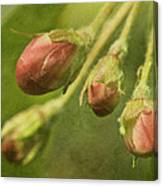Tightly Formed Canvas Print