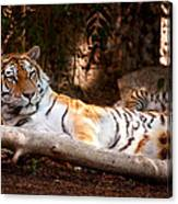 Tigress And Cubs Canvas Print
