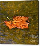 Time Floating Away Canvas Print