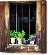 Time Worn Window With Bright Flowers Canvas Print