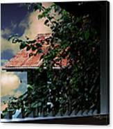 Tin Roof And Vines Canvas Print