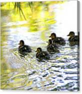 Tiny Baby Ducks Canvas Print