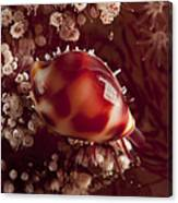 Tiny Cowrie Shell On Dendronephtya Soft Canvas Print