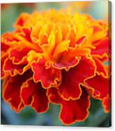 Tiny Flame  2 Canvas Print