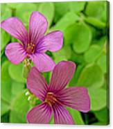 Tiny Flowers In The Clover Canvas Print