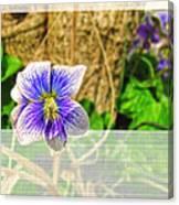 Tiny Violet   Blank Greeting Card Canvas Print