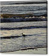 Tip Toeing In The Waves Canvas Print