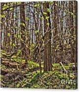 Tire Trees Canvas Print
