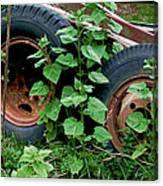 Tires And Ivy Canvas Print
