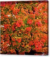 Tn Fall Canvas Print